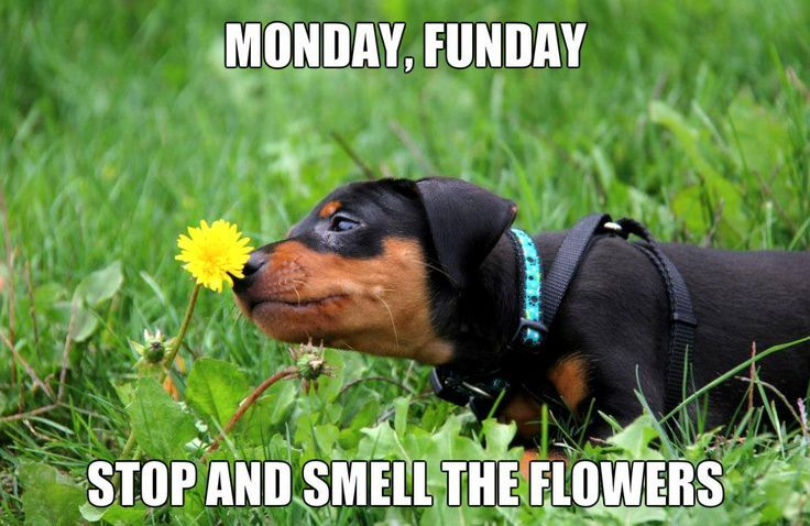 Always stop to smell the flowers!
