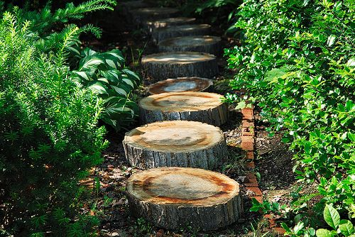 Leap frog? Lily pad jumping? A simple stump path is not onl… | Iи ...