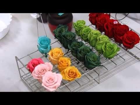 Conoce aquí cómo preservar las rosas - YouTube