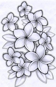 Black And White Plumeria Tattoo Google Search Hawaiian Flower Drawing Plumeria Tattoo Flower Drawing