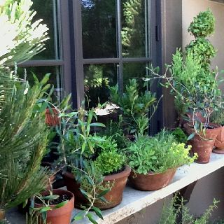 Plant A Kitchen Herb Garden Outside Your Back Door Not Only Will You Have Fresh Herbs To Cook Herb Garden In Kitchen Window Herb Garden Herb Container Garden