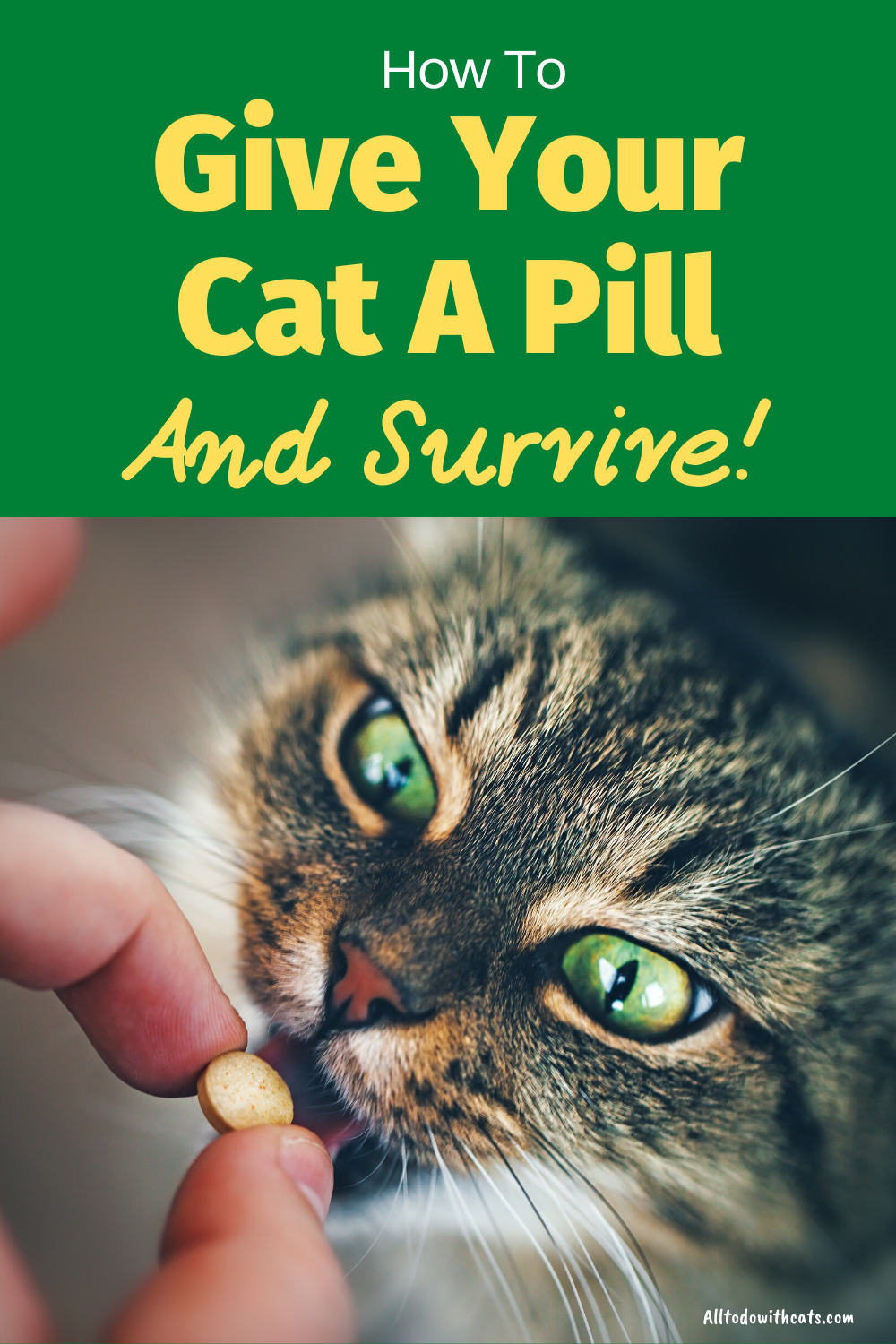 How To Get Your Cat To Take A Pill And Not Get Attacked Pet Care Cats Cat Diet Cat Care Tips