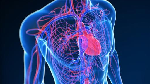 The Guide to Beating a Heart Attack