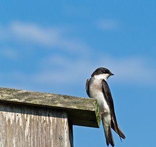 How To Get Rid Of Birds In My Carport Ehow Keep Birds Away Birds How To Attract Birds