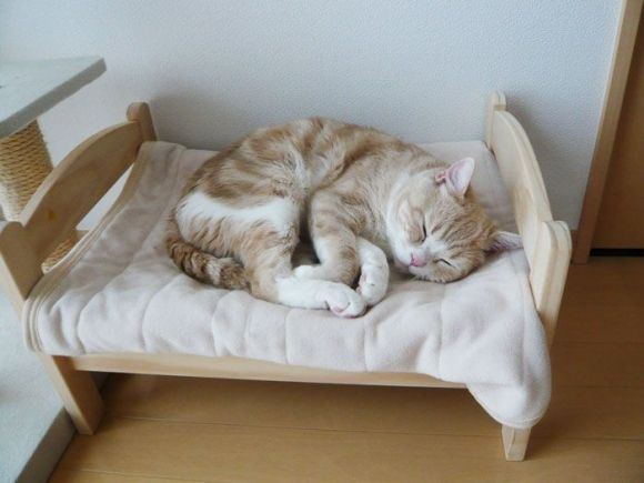 Pretty Cat Sleeping On A Tiny Bed