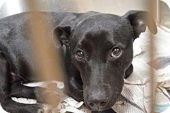 St Petersburg Fl Dachshund Labrador Retriever Mix Meet Buzbee A Dog For Adoption Good With Kids Dogs Cats Dachshund Adoption Dog Adoption Pet Adoption