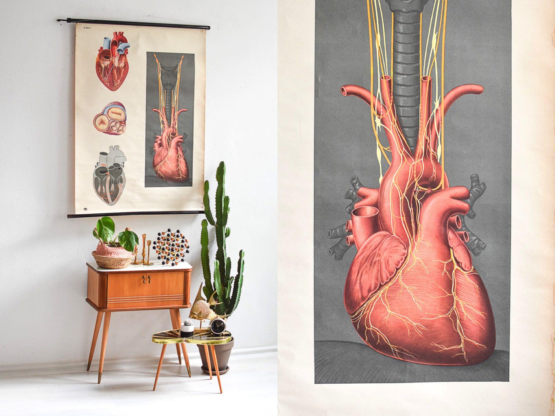 Anatomische Karte, Anatomie Wandkarte, alte Schulkarte, Lehrkarte ...