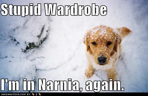 The lion, the witch, the wardrobe, and the doggyz