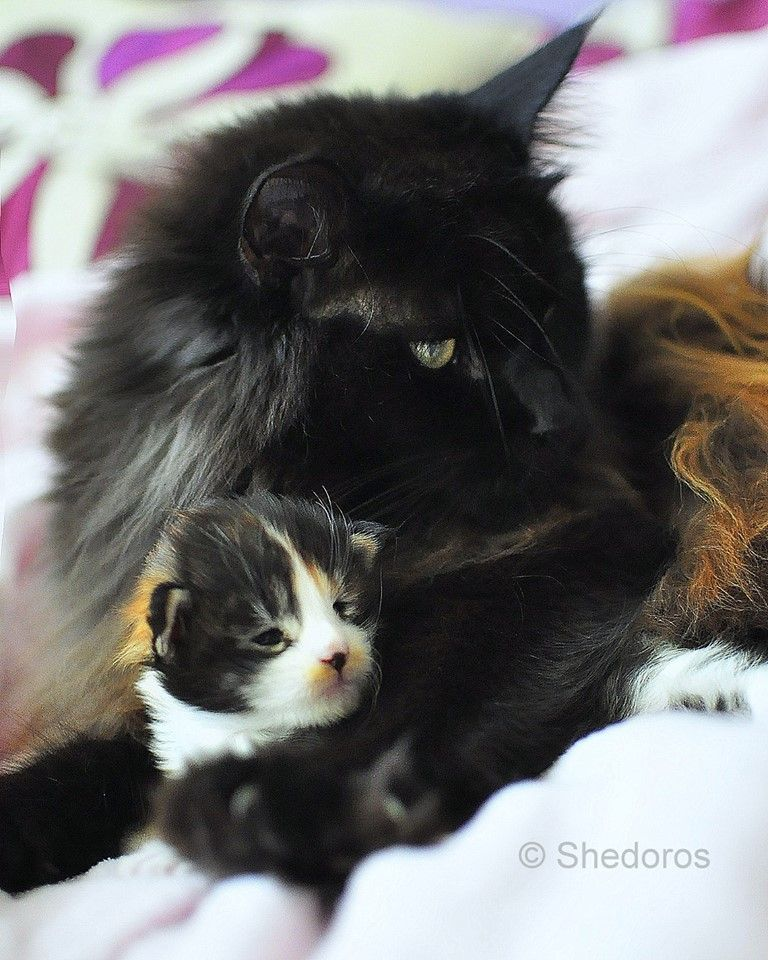 Photo By Dorothea Scibura Cute Cats Cat Family Pictures Cute