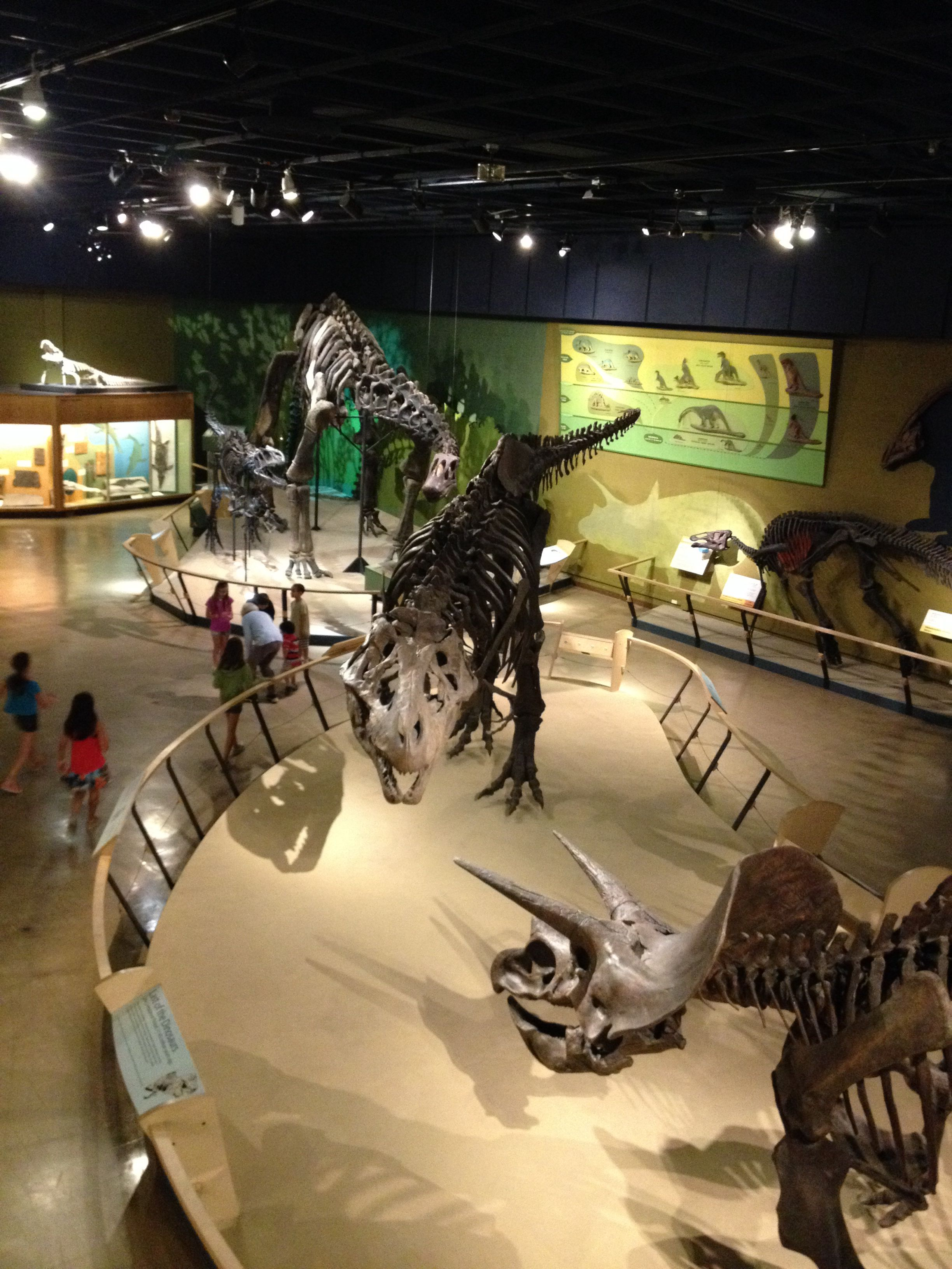 Cleveland Museum Of Natural History #dinosaur Exhibits