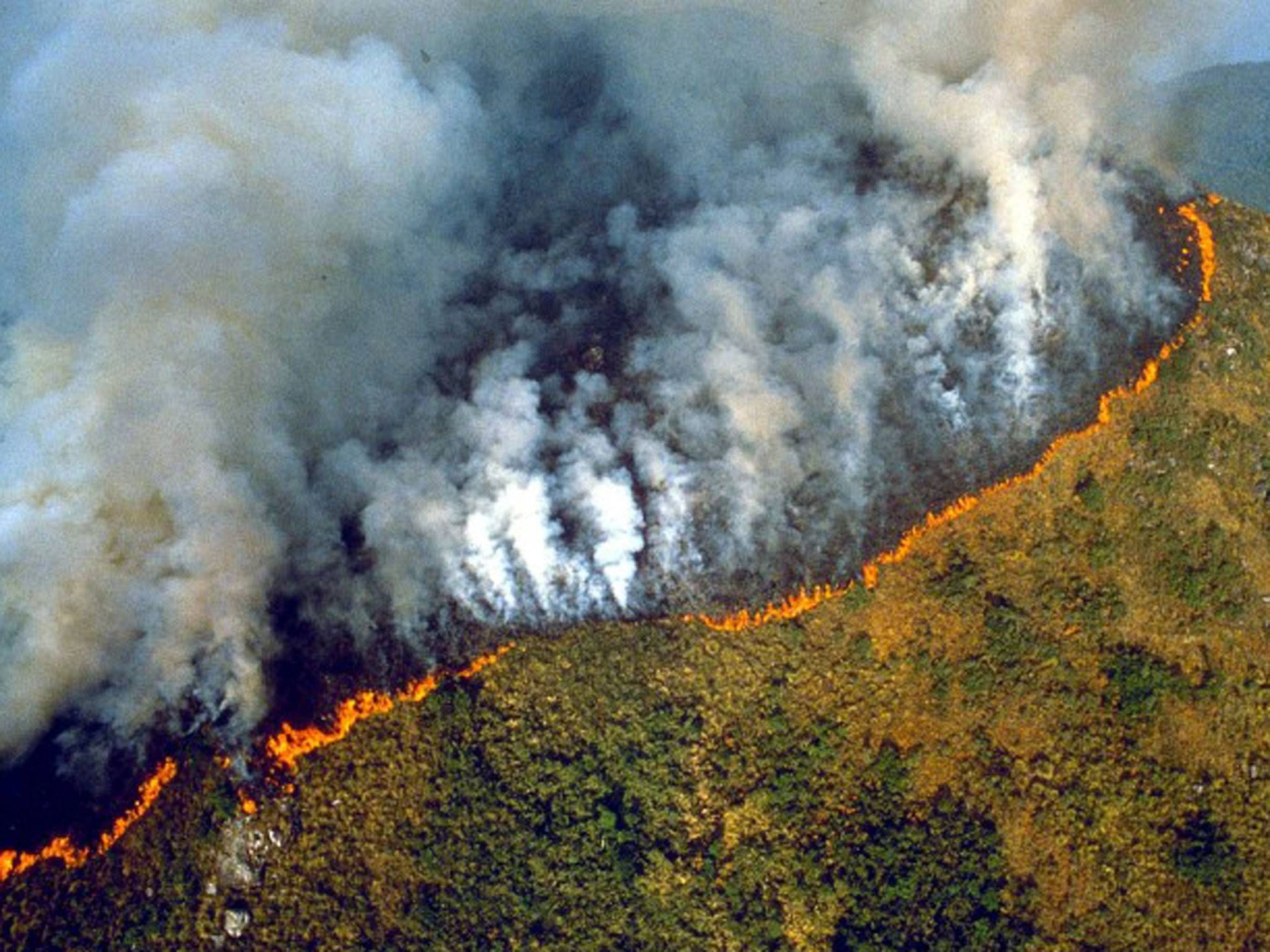 Fires Could Turn Amazon Into Desert As Human Activity And Climate