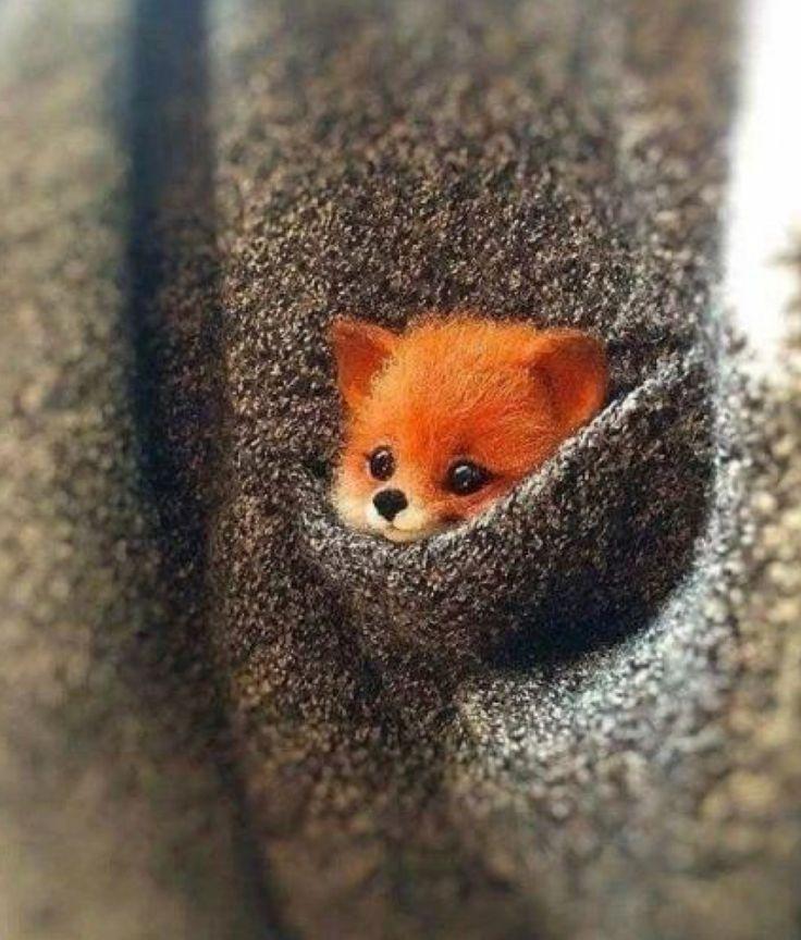So süß, kleines Mitglied der Fuchsfamilie und sooooooo süß
