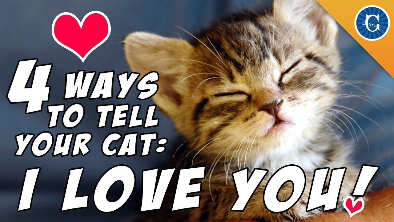 4 ways to tell your cat i love you cute animals cats