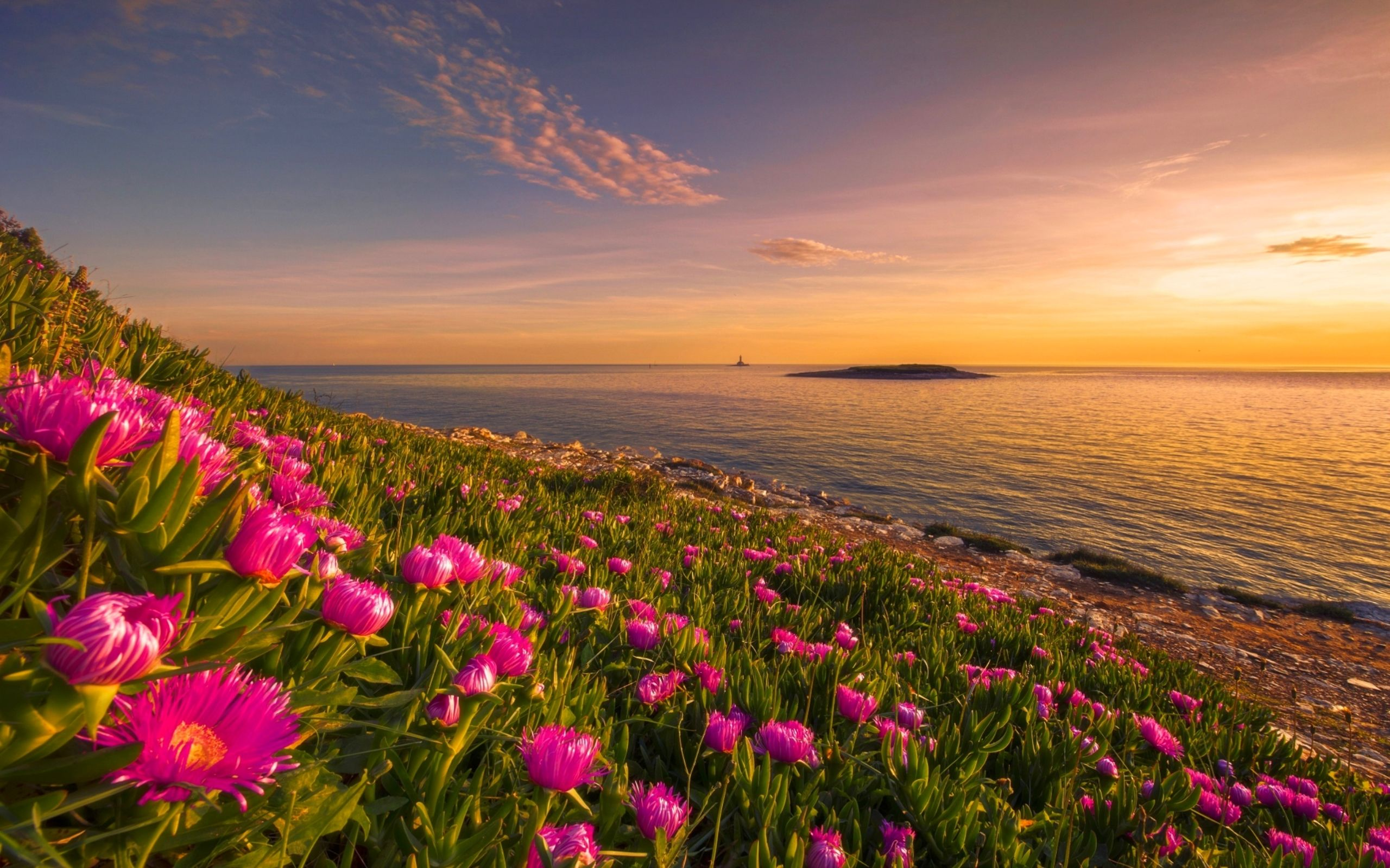 flowers at sunset,Download Best Flowers HD Desktop