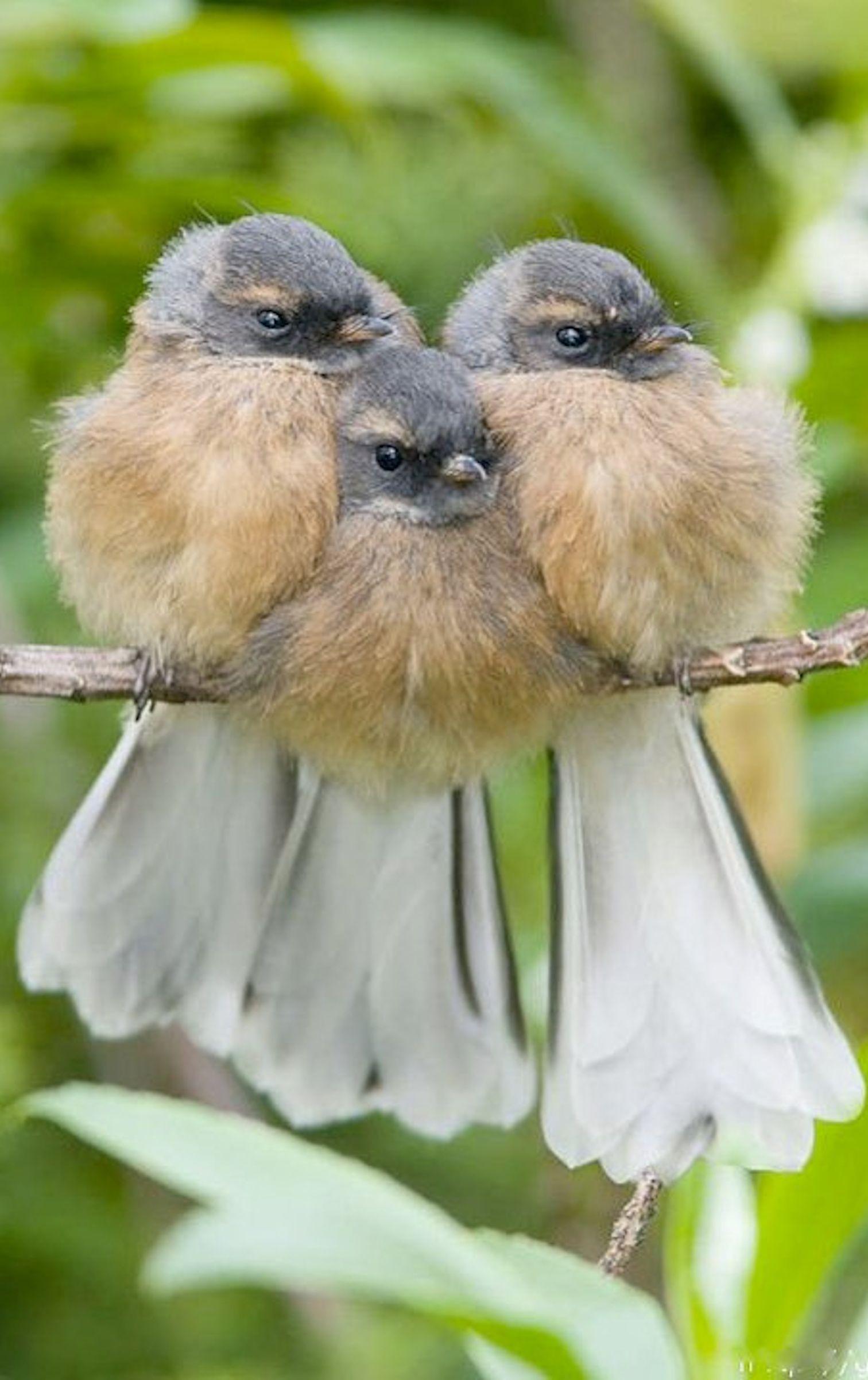 Cute Photos Of Birds Huddling Together