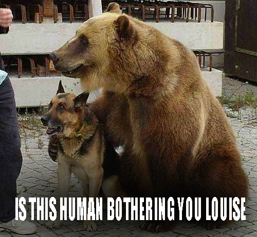 Funny Dog Meme Generator : Bear and dog funny meme desktop backgrounds memes