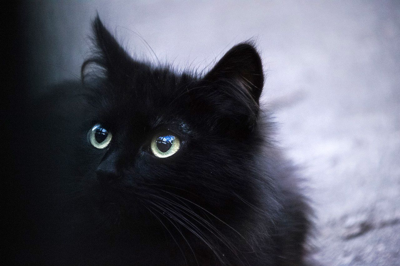 Cats」おしゃれまとめの人気アイデア|Pinterest |Alantie