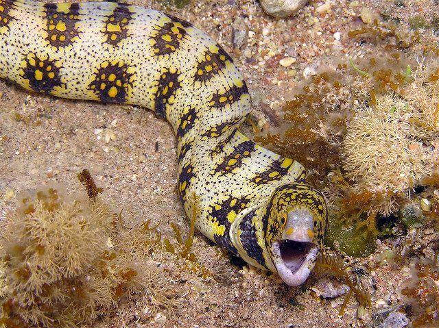 Types Of Eels 10 Marine Eel Species Underwater Animals Types Of Eels Like Animals