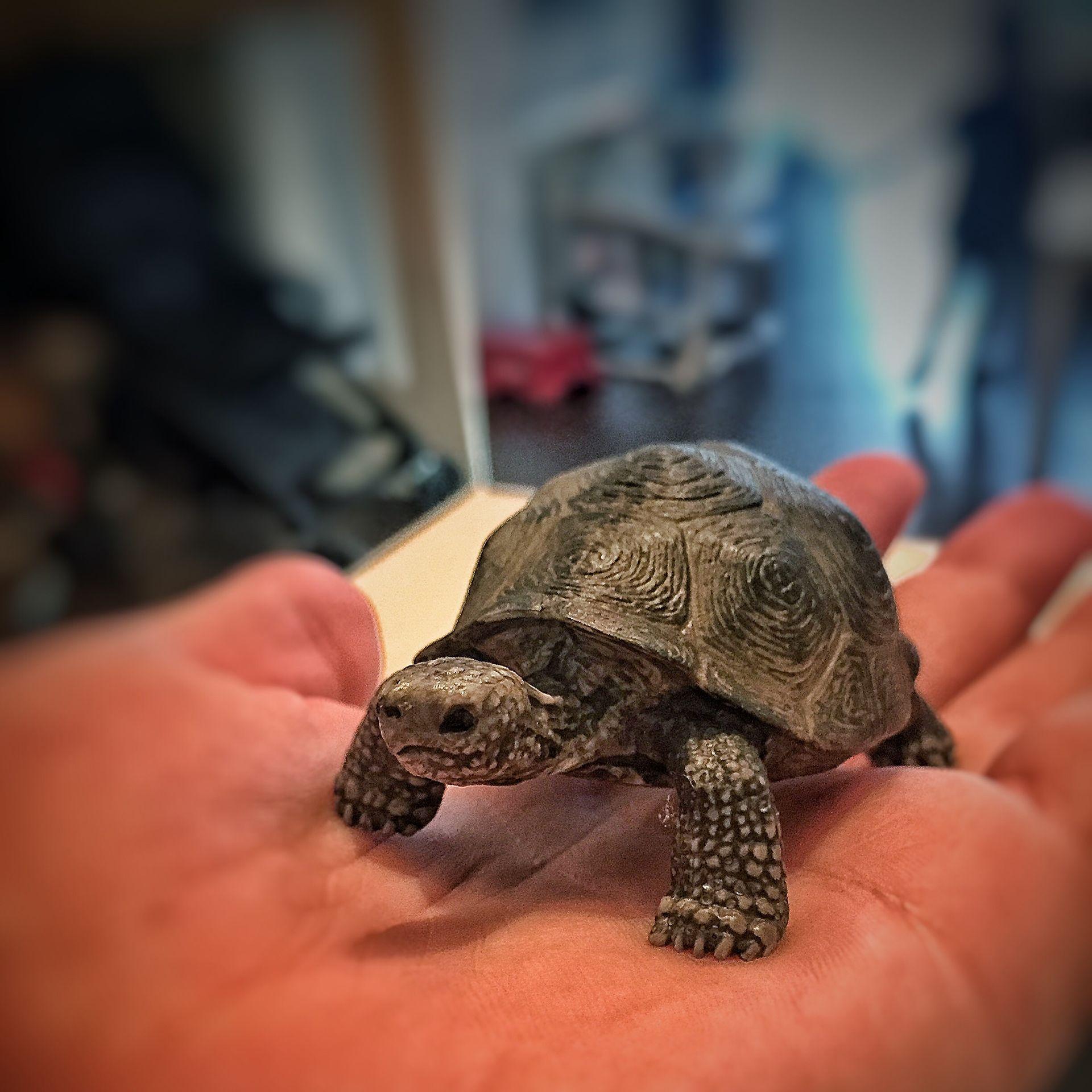 Schildkröte Haustier
