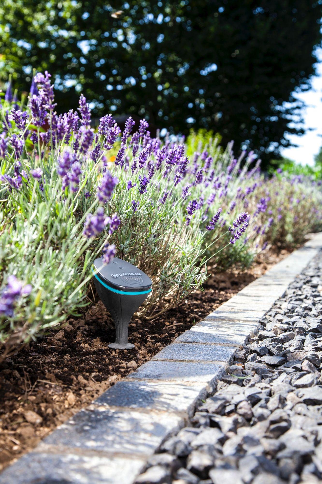 Les solutions naturelles pour maintenir l'humidité du sol