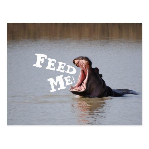 Feed Me! Hippo Postcard