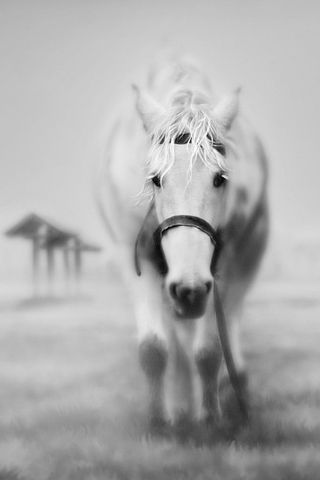 Idesign Iphone Just Another Wordpress Site Horses Horse Wallpaper Beautiful Horses