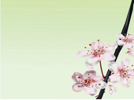 صور خلفيات بوربوينت جديدة متحركة وثابتة بجودة عالية ميكساتك Background Images Wallpaper Backgrounds Abstract Artwork