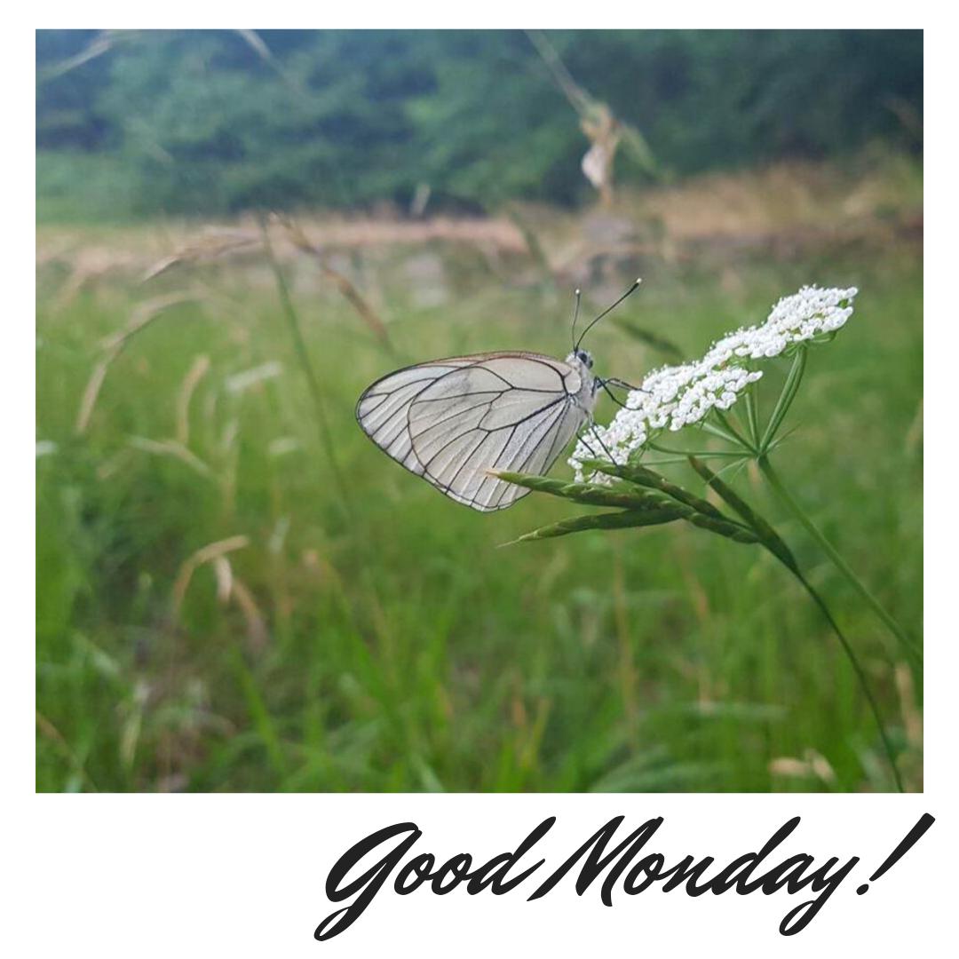 Good Monday!  #cesafstudio ⠀ #studioassociatocesaf #goodmonday ⠀ #morning ⠀ #goodmorning ⠀ #buonlunedi ⠀ #buoniniziosettimana #flowerlover #forestlovers #walkinthewood