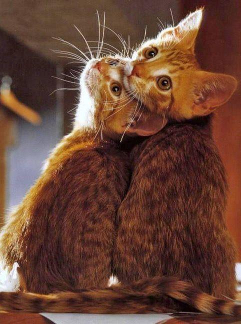 L'amour C'est Regarder Dans La Même Direction : l'amour, c'est, regarder, même, direction, L'amour, C'est, Regarder, Ensemble, Même, Direction...., Mignon,, Chats, Chatons,, Bébé
