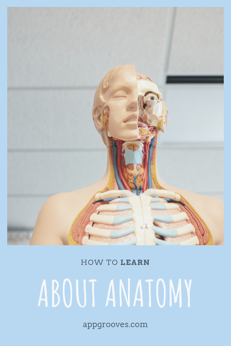 Best Anatomy Apps - 3D Renderings, Quizzes & Multi-Lingual Support ...
