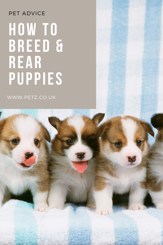 Breeding And Rearing Puppies Petz In 2020 Puppy Insurance