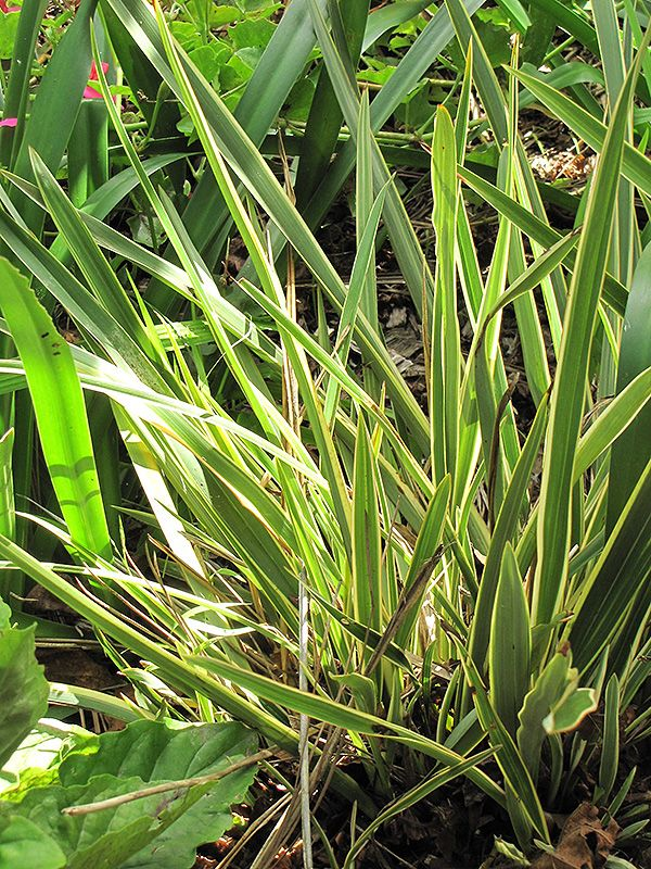Find Plants Squak Mt Greenhouses Nursery Plants New Zealand Flax Mountain Nursery