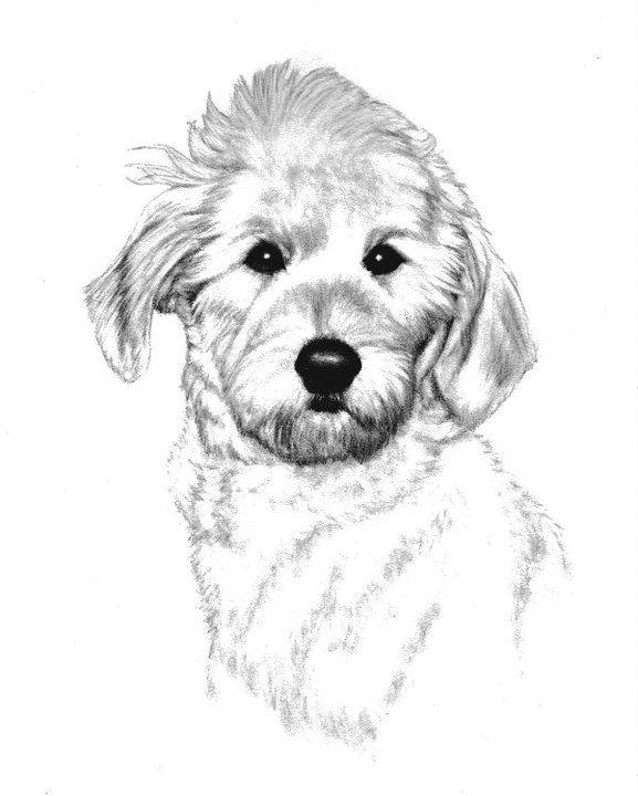 Pet Portraits By Schlueter Sketch Studios Artist Genevieve Schlueter Dog Sketch Pet Portraits Dog Portraits Pet Portraits Dog Sketch Dog Portraits
