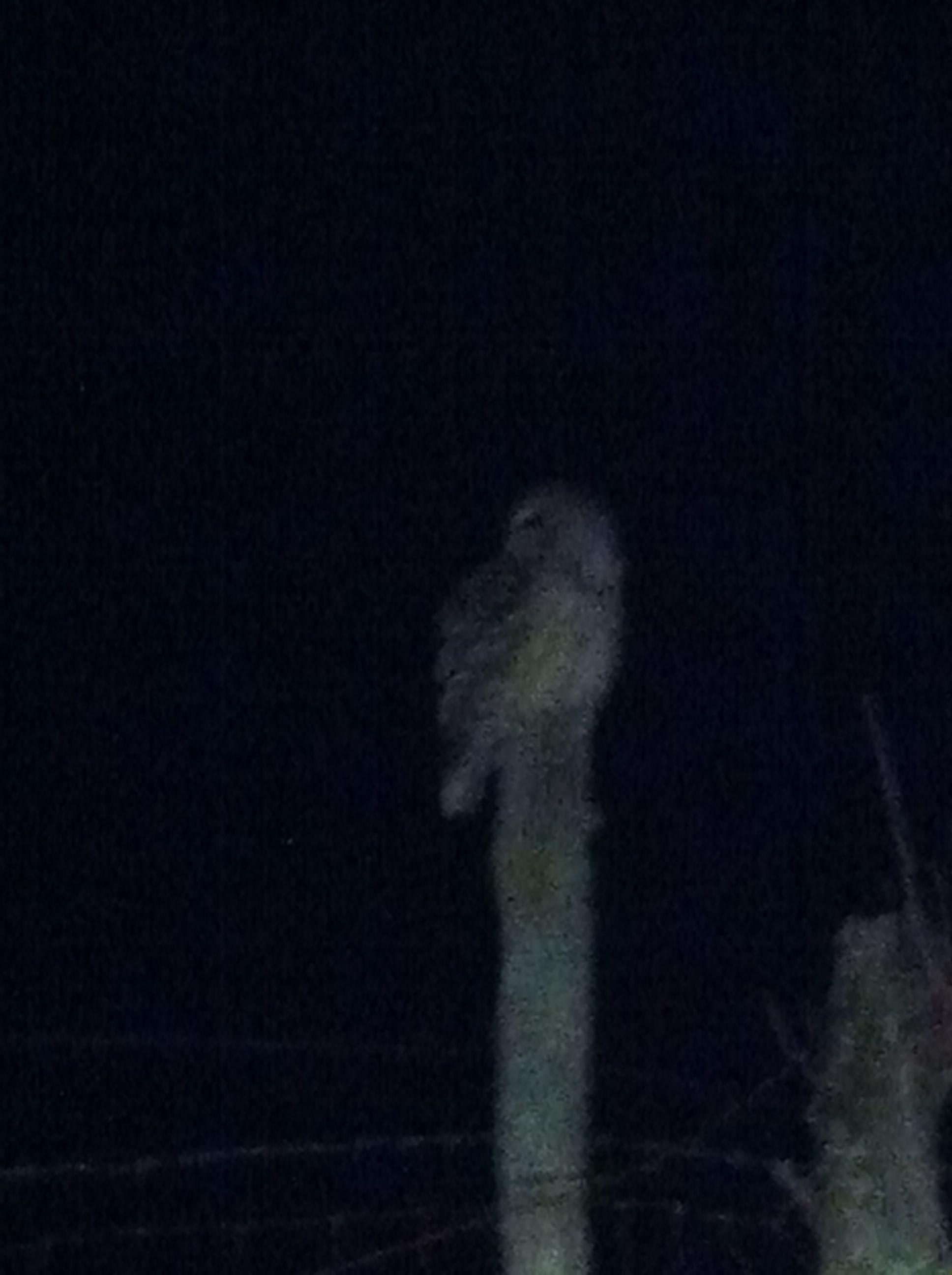 Barred owl near our house