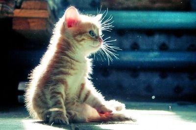 <3 kittenloveee