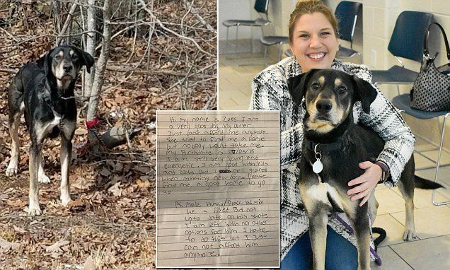 Dog found tied to a tree with a goodbye note gets adopted
