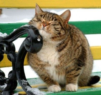 Fat Cat Friday - http://blog.hepcatsmarketing.com - check out our blog network for more cute like this!