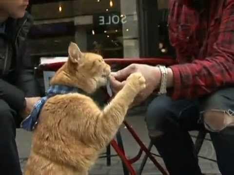 A Street Cat Named Bob - short documentary - YouTube