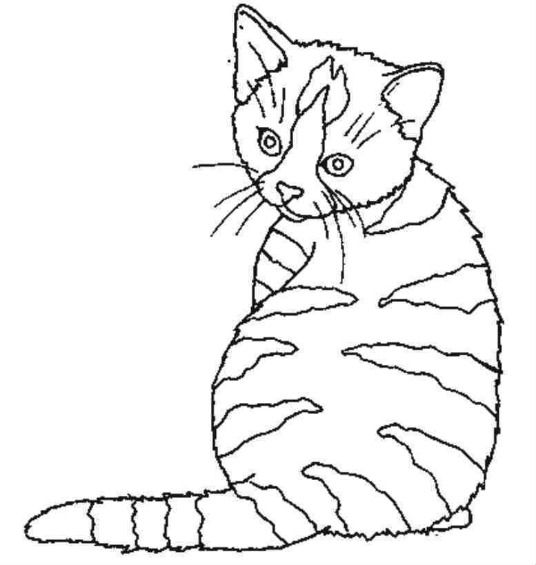 Coloriage A Imprimer Animaux Chat Cat Coloring Page Cat Quilt