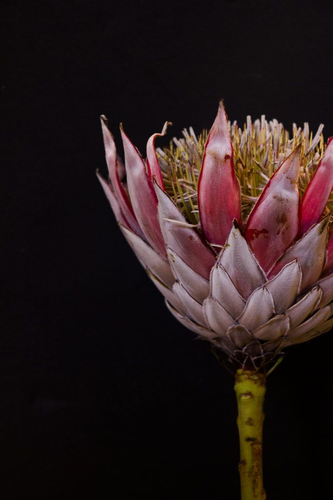 New From Just South West West Art Art Floral Photography