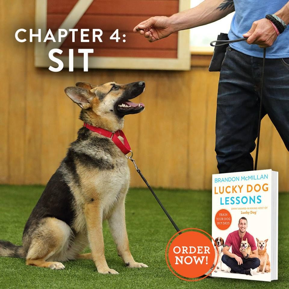 The Sit Command Is A Prerequisite For Just About Every Other