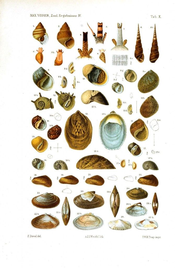 seashells images and names - Cerca con Google