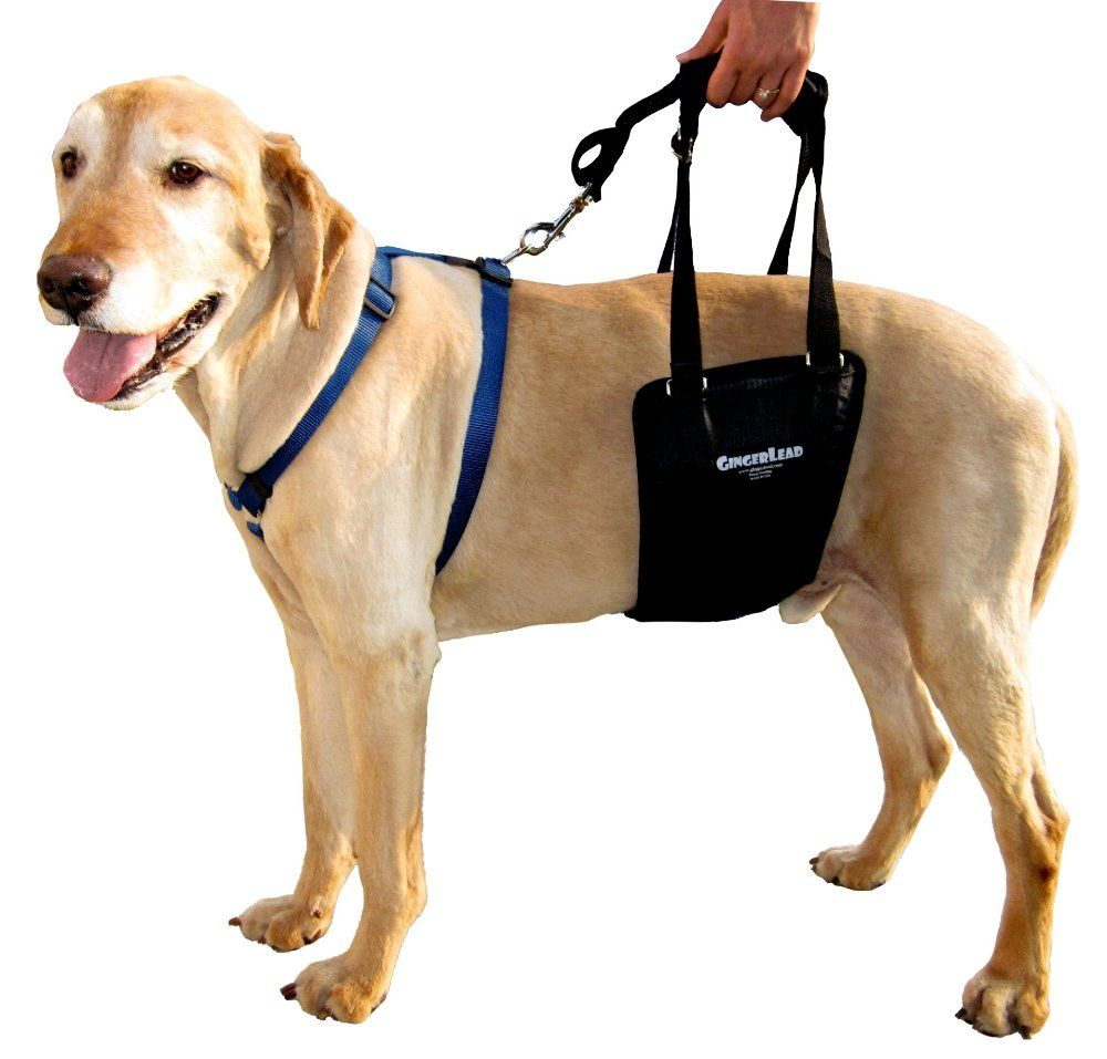 Tplo Recovery What You And Your Dog Can Expect Dog Sling