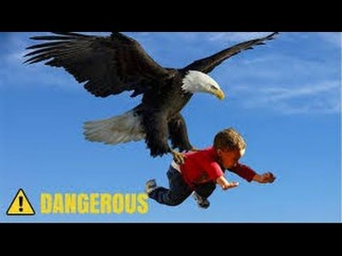 The Power of Eagles - Eagles VS Attacks Dog, Bear,baby ...