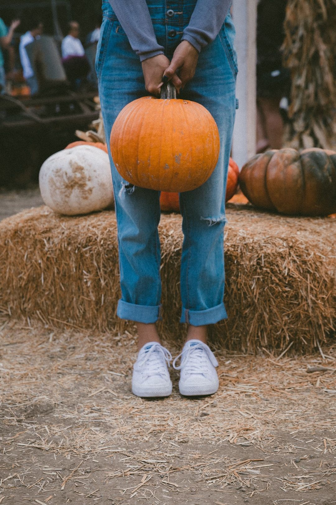 Pumpkin Girl. Download this photo by Jakob Owens on