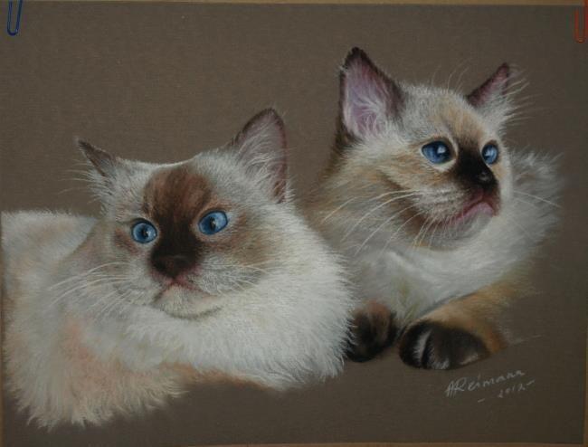 Cats by ArtbyAnuR on deviantART
