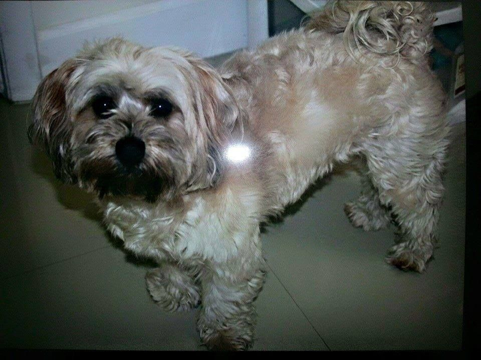 Snedy Vilas Lost Dogs Of Broward And Dade County April 2 Lost