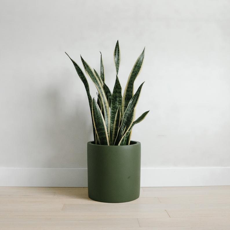 Tuscan Olive Green Planter Pot Cylinder Indoor Outdoor Etsy Planter Pots Planters Indoor Planters