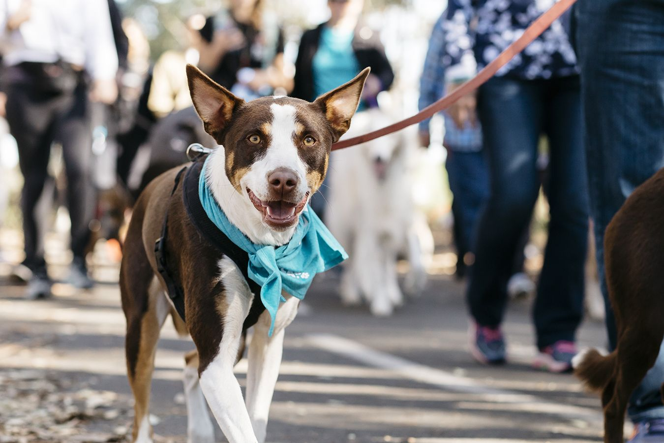 Rspca Million Paws Walk 2019 May 19 Australian Dog Lover Dogs Day Out Fight Animal Cruelty Australia Animals