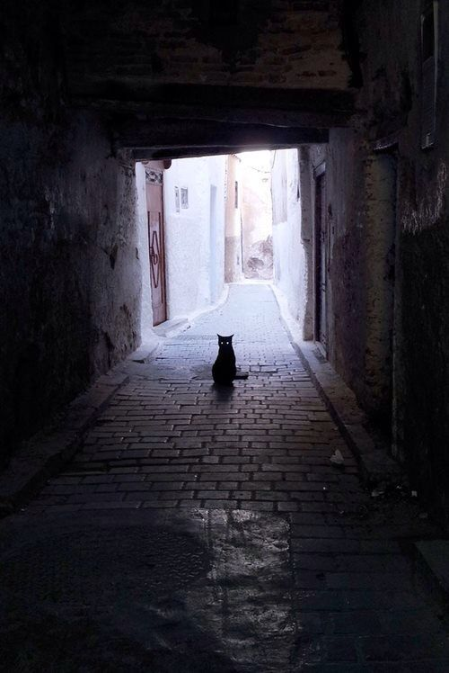 cat sitting in an alleyway